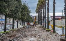 El Ayuntamiento de Santander sustituirá las 21 encinas de la Estación Marítima por 16 arces