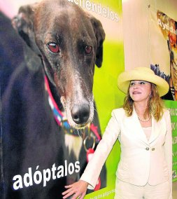 En defensa de los galgos