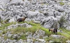 Ultimátum a los dueños de cabras en el Desfiladero