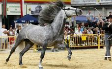 Amantes de los caballos, a Torrelavega