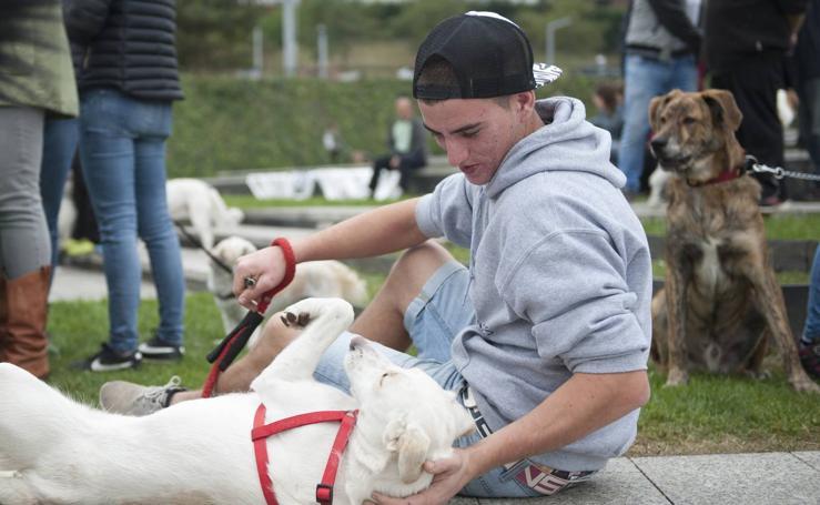 Un centenar de perros se reunieron este domingo en Las Llamas con motivo de la III Feria de Animales