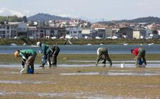 Los mariscadores se ponen manos a la obra para repoblar la bahía