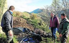 Aparecen muertos 11 terneros del ganadero de Bielva que perdió 23 tudancas en un incendio