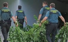 Anulada una condena de 3 años y medio de cárcel por tener 16 plantas de marihuana «porque el juez no fue imparcial»