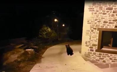 La presencia del segundo oso hace crecer la alarma en Cabezón de Liébana