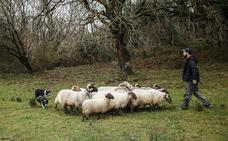 Exhibición de pastoreo con perros en el Parque de la Naturaleza de Cabárceno