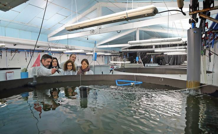 La piscifactoría de Naturix en Pesués