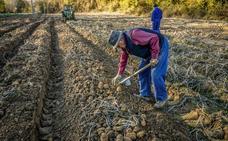 Valderredible inicia su reparto de patatas solidario por municipios de Cantabria