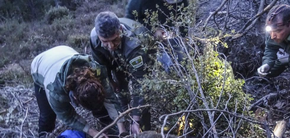 'Beato' seguirá cautivo hasta que mejore el tiempo y haya brotes en los bosques
