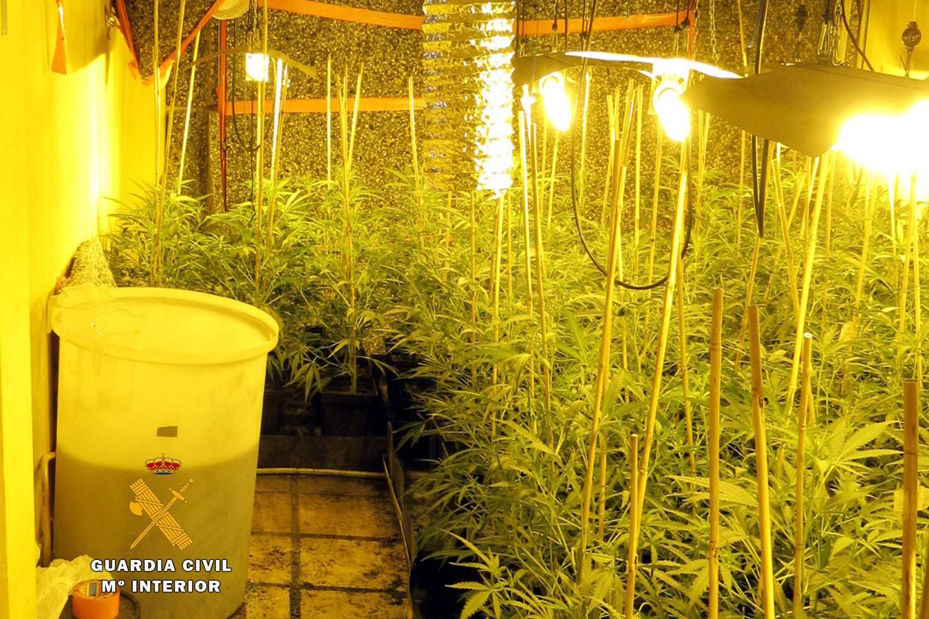 desmantelado un cultivo indoor de marihuana en una casa de treto