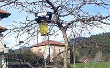 Roban sesenta trampas de avispa asiática colocadas por el Ayuntamiento en Castro Urdiales
