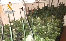 Desmantelada una plantación de marihuana en el garaje de una vivienda de Camargo