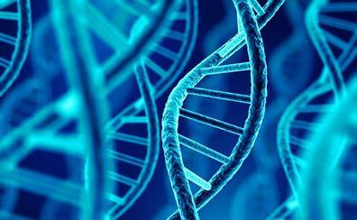 Identifican una nueva forma de ADN en las células humanas vivas