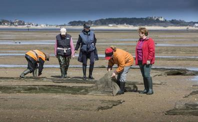 El Gobierno encomienda a MARE el control sanitario de las zonas de producción de moluscos bivalvos de Cantabria