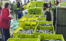Los pescadores del Cantábrico acuerdan una rebaja en el cupo diario de bocarte