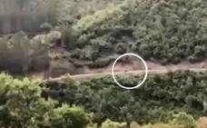 Un oso irrumpió en un tramo de carretera durante el Rally de Liébana