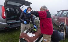 Dos de los tres quebrantahuesos muertos en Picos fueron envenenados