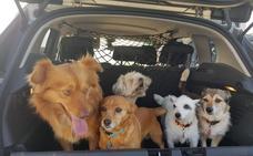 Un concurso canino para elegir a los perros más guapos y simpáticos, este domingo en Las Llamas
