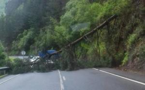 La caída de un árbol corta durante una hora el tráfico a la altura del cruce de Cieza