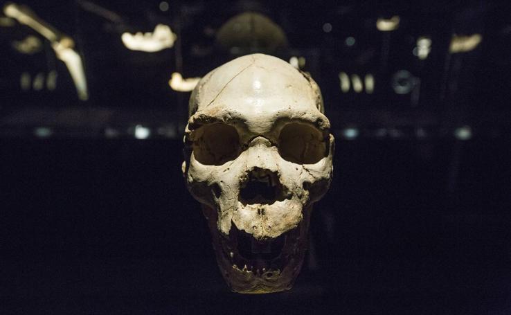 Así es el Museo de la Evolución Humana y el parque arqueológico de Atapuerca
