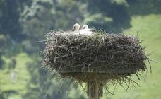 Madres voladoras