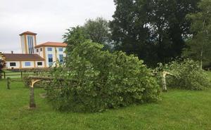Los vándalos talan cinco árboles en un parque público de Entrambasaguas