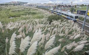 Cantabria se propone eliminar el plumero en los próximos cuatro años
