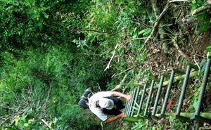 Los bosques vírgenes desaparecen aceleradamente en el mundo