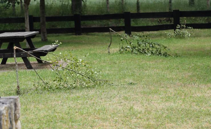 Árboles completamente destrozados en el área recreativa de Terán