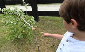 Destruyen por segunda vez los árboles plantados en el área recreativa de Terán