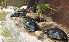 Cabárceno habilita un espacio para la adopción de tortugas domésticas