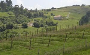 El área de El Pendo quiere impulsar un turismo que fusione vino y arqueología