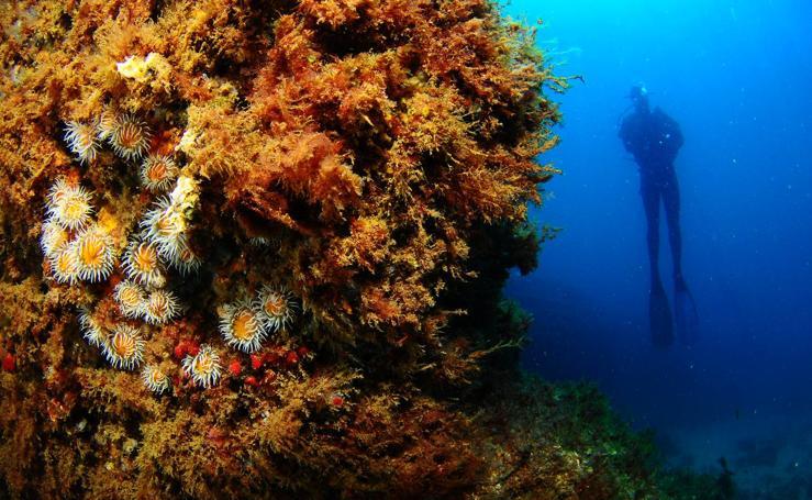 Mouro, la isla salvaje de la bahía