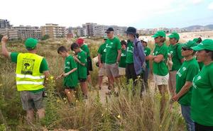 Un millar de voluntarios retiran 40 toneladas de invasoras en las dunas de Salvé de Laredo en seis años