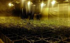 Dos detenidos con 78 plantas de marihuana y varias serpientes en una casa de Jaén