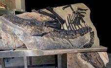 Italia recupera a Bruno, su dinosaurio más grande