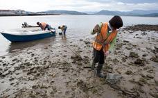 Los mariscadores sopesan denunciar en la UE la suciedad de las marismas de Santoña