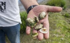 Medio Ambiente detecta vertidos de aguas fecales en varios puntos de la costa
