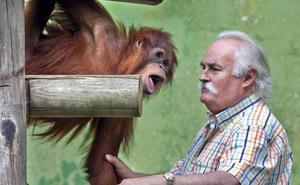 Victoria, la orangutana de Sumatra criada en Santillana, cumple 13 años