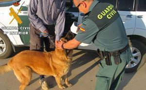 Investigan a un cántabro por la muerte de dos perros asfixiados dentro de un coche en Palencia