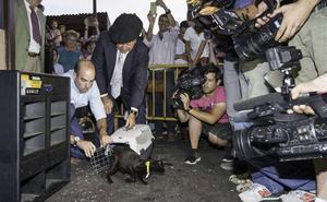 Los animalistas piden que la gata negra de Carasa sea reemplazada por «un peluche o una persona disfrazada»