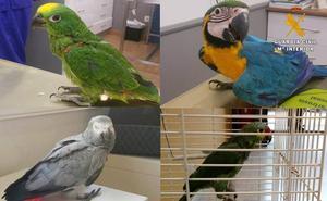 Detenidas cuatro personas por el robo de 21 aves exóticas en la comarca del Besaya