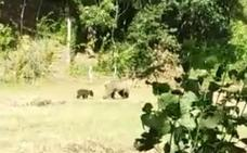 El Gobierno pide precaución si se avista a una osa y a su cría en la zona de Campoo