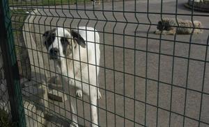 El Seprona investiga la muerte de un perro clavado en una verja tras ser lanzado por encima de ella