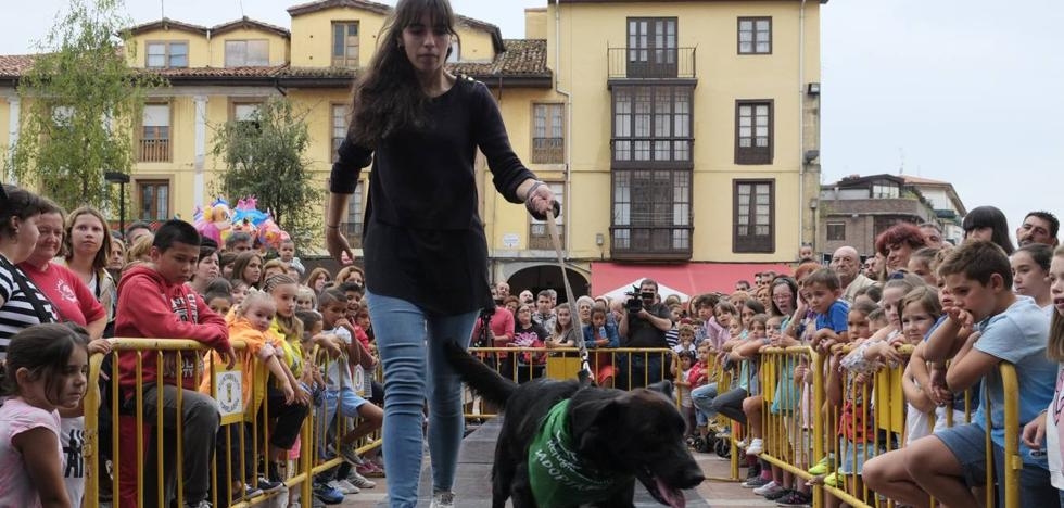 Jornada festiva para fomentar la adopción y el respeto a los animales