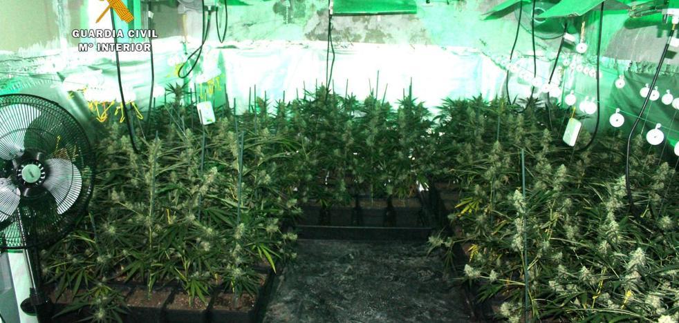 Intervenidos más de 17 kilos de marihuana en una casa alquilada en Anero
