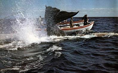 La caza del tigre de los mares