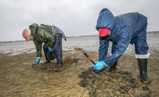 Los mariscadores consideran un «parche» la reapertura de la pesca de la almeja en Santander