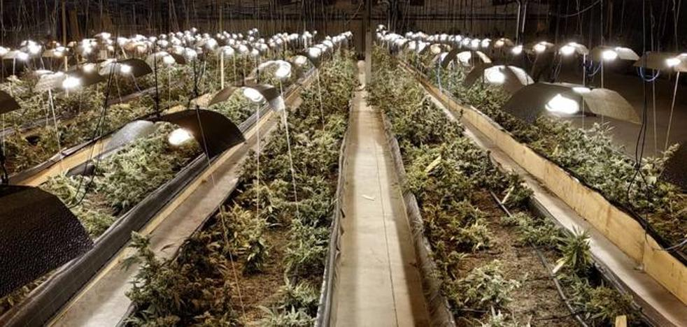 Un español sin antecedentes, único detenido por la gran plantación de marihuana de Toranzo