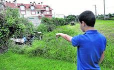 Un vecino de Villapresente termina en la UCI tras ser atacado por avispas asiáticas